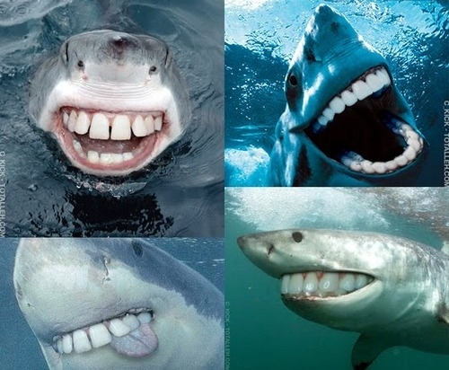 Friendly-shark-smiles-31754-1259951119-10